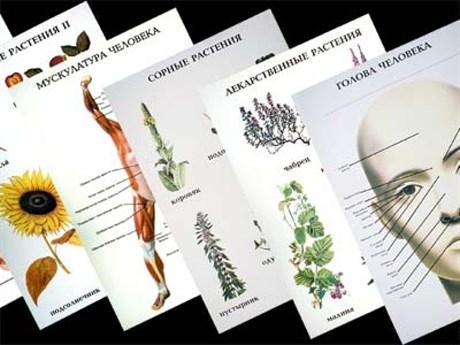 Таблицы по природоведению 1-3 кл. (46 шт, ф. А2) - фото 57817