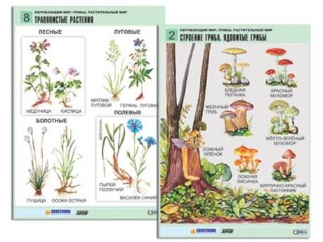 """Комплект таблиц для нач. шк. """"Окружающий мир. Грибы. Растительный мир"""" (12 табл., формат А1, лам.) - фото 57820"""