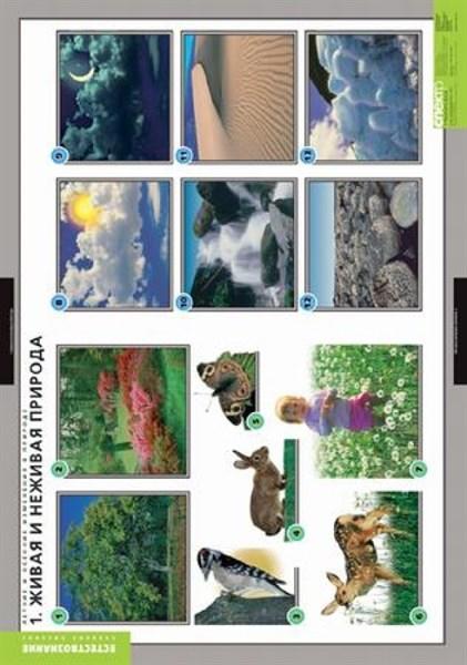 Комплект таблиц - Летние и осенние изменения в природе - фото 57827