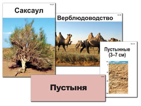"""Модель-аппликация """"Природные зоны России"""" (ламинированная) - фото 57924"""