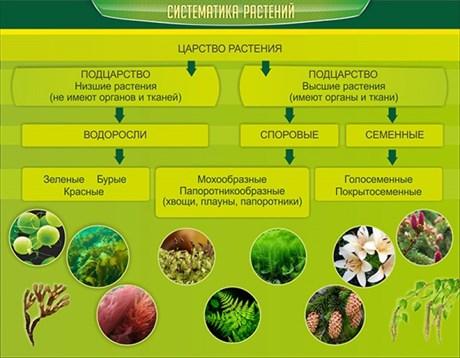 Стенд Систематика растений - фото 58886