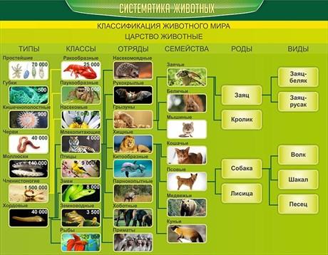 Стенд Систематика животных - фото 58887