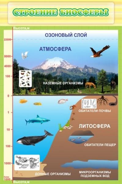 Стенд Строение биосферы - фото 58892