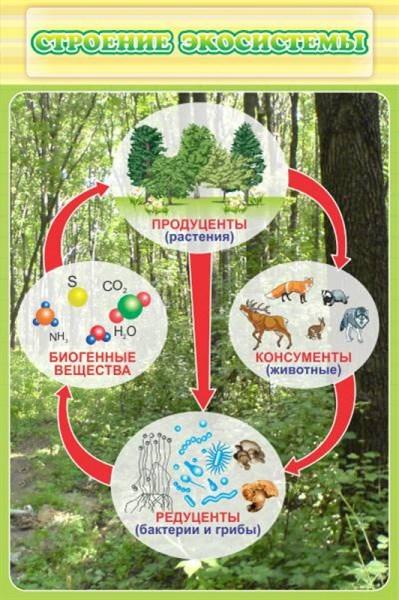 Стенд Строение экосистемы - фото 58893