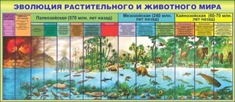 Стенд Эволюция растительного и животного мира - фото 58897