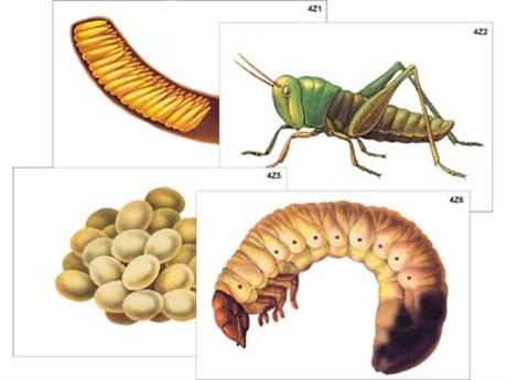 """Модель-аппликация """"Развитие насекомых с полным и неполным превращением"""" - фото 58936"""