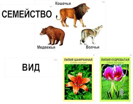 """Модель-аппликация """"Классификация растений и животных"""" - фото 58942"""