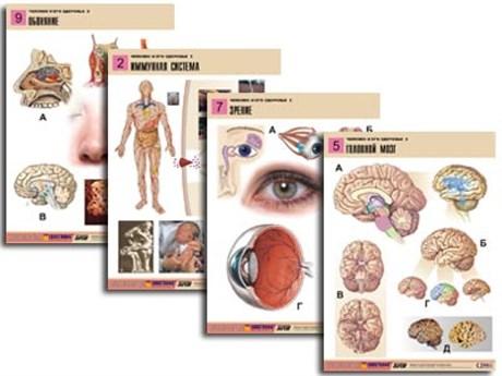 """Комплект таблиц по биологии дем. """"Человек и его здоровье 2"""" (10 табл., формат А1, лам.) - фото 58953"""