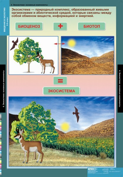 Комплект таблиц. Биология. Введение в экологию (18 таблиц) - фото 58956