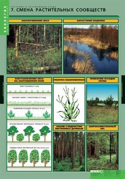 Комплект таблиц. Биология. Растения и окружающая среда (7 таблиц) - фото 58963