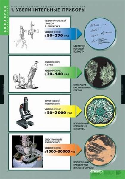 Комплект таблиц. Биология. Вещества растений. Клеточное строение (12 таблиц) - фото 58966