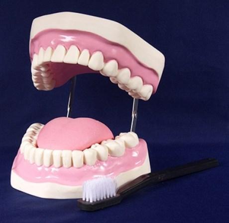 """Модель """"Гигиена зубов"""" - фото 59030"""