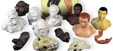 """Комплект палеонтологических моделей """"Происхождение человека"""" - фото 59033"""