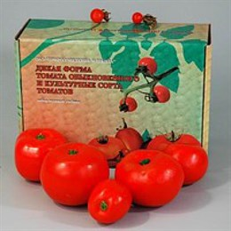"""Набор муляжей """"Дикая форма томата обыкновенного и культурные сорта томатов"""""""