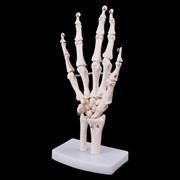 """Модель """"Анатомическая модель кисти руки"""""""