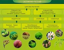 Стенд Систематика растений