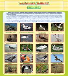 Стенд Красная книга - птицы