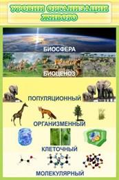 Стенд Уровни организации живого