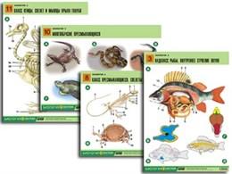 "Комплект таблиц по биологии дем. ""Зоология 2"" (16 табл., формат А1, лам.)"