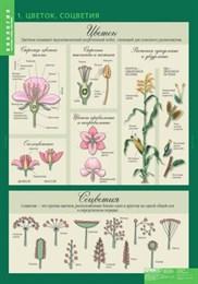 Комплект таблиц. Биология. 6 класс. Растения, грибы, лишайники. 14 таблиц