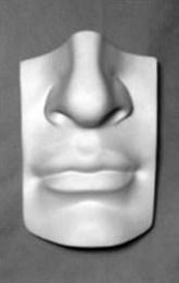"""Гипсовая модель """"Нос человека"""""""