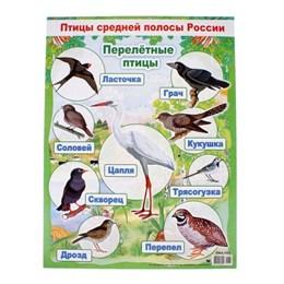"Плакат ""Перелетные птицы"""