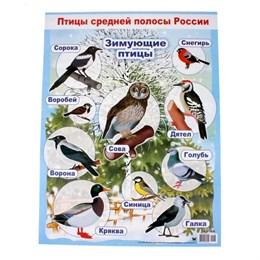 """Плакат """"Зимующие птицы"""""""