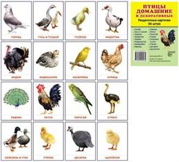 Птицы домашние и декоративные.16 раздаточных карточек