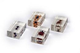 Микропрепараты для стереомикроскопа.  Мелкие насекомые в акриловых призмах