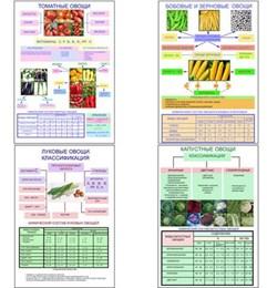 """Плакаты ПРОФТЕХ """"Классификация овощей"""""""