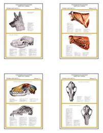 """Плакаты ПРОФТЕХ """"Топограф. анатомия. Собака. Голова и шея"""""""