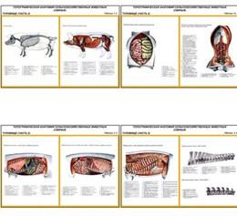 """Плакаты ПРОФТЕХ """"Топограф. анатомия. Свинья. Туловище"""""""