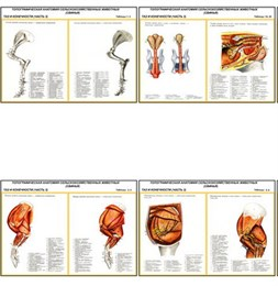 """Плакаты ПРОФТЕХ """"Топограф. анатомия. Свинья. Таз и конечности"""""""