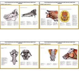 """Плакаты ПРОФТЕХ """"Топограф. анатомия. Свинья. Голова и шея"""""""