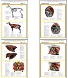 "Плакаты ПРОФТЕХ ""Топограф. анатомия. Овца, баран. Туловище"""