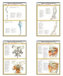 """Плакаты ПРОФТЕХ """"Топограф. анатомия. Лошадь. Таз и конечности."""""""