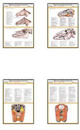 """Плакаты ПРОФТЕХ """"Топограф. Анатомия. Лошадь. Голова и шея"""""""