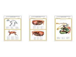 """Плакаты ПРОФТЕХ """"Топограф. анатомия. Кролик. Туловище"""""""