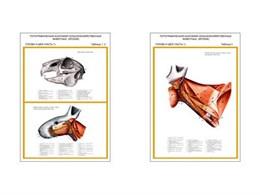 """Плакаты ПРОФТЕХ """"Топограф. анатомия. Кролик. Голова и шея"""""""
