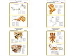 """Плакаты ПРОФТЕХ """"Топограф. анатомия. Кошка. Таз и конеч."""""""