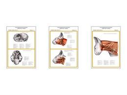"""Плакаты ПРОФТЕХ """"Топограф. анатомия. Кошка. Голова и шея"""""""