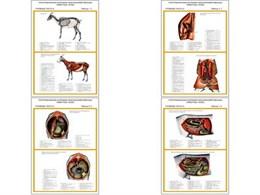 "Плакаты ПРОФТЕХ ""Топограф. анатомия. Коза. Туловище"""