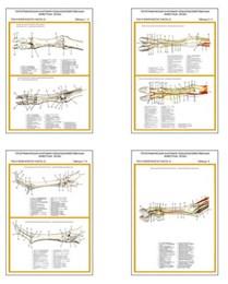"""Плакаты ПРОФТЕХ """"Топограф. анатомия. Коза. Таз и конечности"""""""
