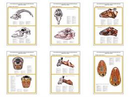 """Плакаты ПРОФТЕХ """"Топограф. анатомия. Коза. Голова и шея"""""""