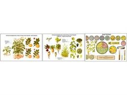 """Плакаты ПРОФТЕХ """"Происхождение культурных растений. (картофеля, свеклы и подсолнуха.)"""""""