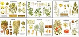 """Плакаты ПРОФТЕХ """"Классификация растений"""""""